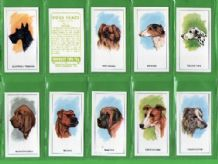 TRADE/ cigarette cards Dogs Heads by Dairy Farmers